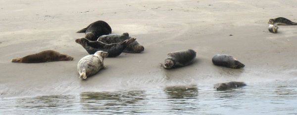 Photo of seals.
